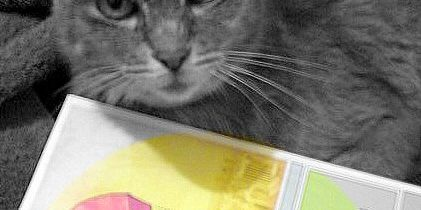 Cat checks out Design Flaws of the Human Condition